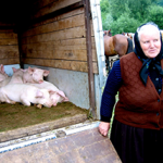 Livestock Business Loans